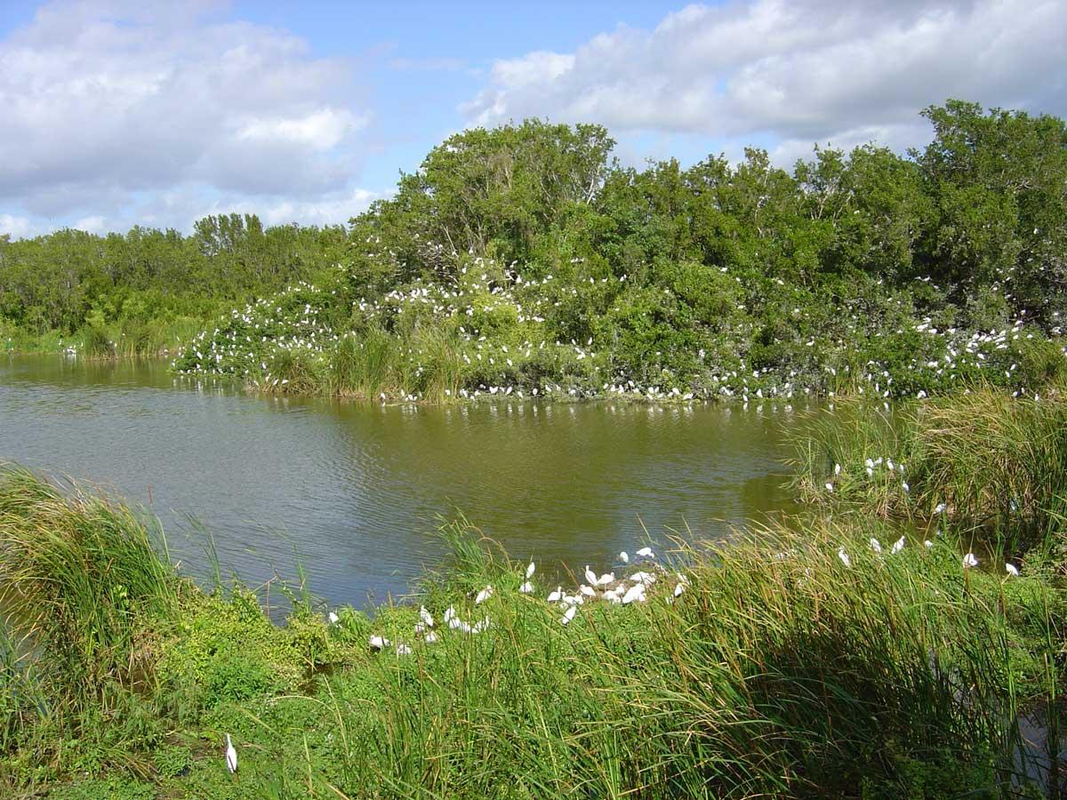 Parco nazionale delleEverglades