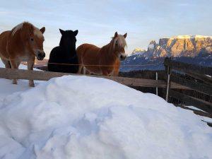 cavalli del Maso Ebenhof