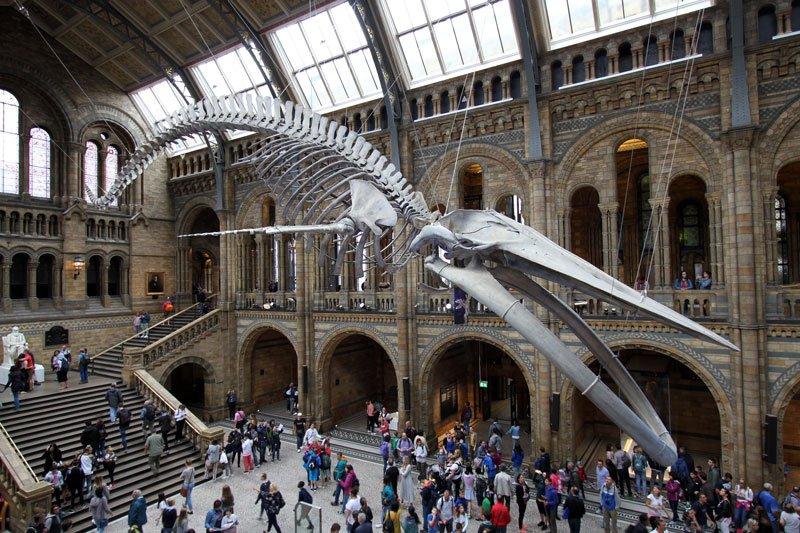 Museo di Scienze Naturali a Londra