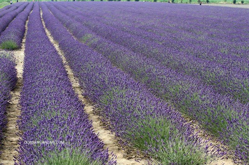 Fioriture di primavera in Veneto