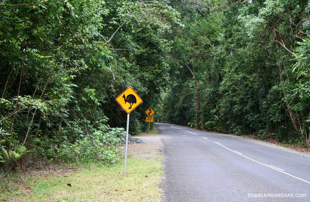 Australia. Queensland: dalla barriera corallina alla foresta pluviale