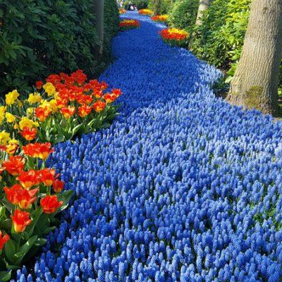Keukenhof: il parco dei tulipani in Olanda